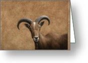 Curious Greeting Cards - Barbary Ram Greeting Card by James W Johnson