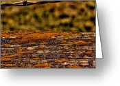 Rotted Greeting Cards - Barbed Fence Greeting Card by David Patterson