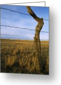 Tree Lines Greeting Cards - Barbed Wire Fence Along Dry Creek Road Greeting Card by Gordon Wiltsie