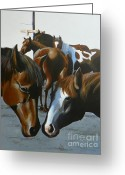 Quarter Horses Greeting Cards - Bardyard Gossip Greeting Card by David Ackerson