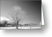 Bare Tree Greeting Cards - Bare Frozen Tree In Winter Greeting Card by Yaplan