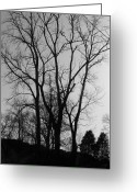 Winter Trees Greeting Cards - Bare Limbs Greeting Card by Vijay Sharon Govender