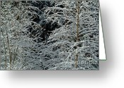 Tree-covered Greeting Cards - Bare tree branches covered in snow Greeting Card by Sami Sarkis