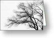 Gray Sky Greeting Cards - Bare Tree Silhouette Greeting Card by Larry Ricker