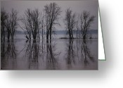 Midwestern States Greeting Cards - Bare Trees Reflected In The Water Greeting Card by Sam Abell
