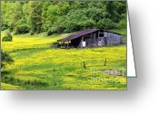 Buttercups Greeting Cards - Barn and Buttercups Greeting Card by Thomas R Fletcher