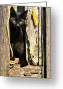 Black Fur Greeting Cards - Barn Cat Greeting Card by Kristin Elmquist