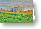 Lilies Flowers Greeting Cards - Barn in Field of Flowers Greeting Card by Geary Barr