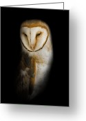 Bill Wakeley Greeting Cards - Barn Owl Greeting Card by Bill  Wakeley
