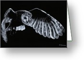 Bird Of Flight Greeting Cards - Barn Owl Greeting Card by Richard Young