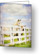 Quarter Horse Greeting Cards - Barn Yard Dreamer Greeting Card by Darren Fisher