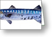 Barracuda Greeting Cards - Barracuda Greeting Card by Carey Chen