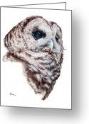 Owl Drawings Greeting Cards - Barred Owl Greeting Card by Brent Ander
