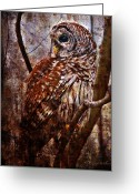 Owl Digital Art Greeting Cards - Barred Owl In Hiding Greeting Card by J Larry Walker