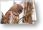 Owl Digital Art Greeting Cards - Barred Owl In Morning Prayer Greeting Card by J Larry Walker
