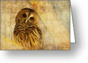 Gold Greeting Cards - Barred Owl Greeting Card by Lois Bryan