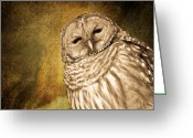 Barred Owl Greeting Cards - Barred Owl with Textured background Greeting Card by Michel Soucy