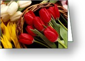 Dew Greeting Cards - Basket with tulips Greeting Card by Garry Gay