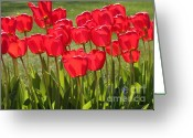 Reds Greeting Cards - Basking in the Sunshine Greeting Card by Carol Groenen