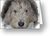 Pure Digital Art Greeting Cards - Basset Griffon Vendeen Greeting Card by Larry Linton