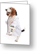 Coat Greeting Cards - Basset Hound Dog Dressed as a Veterinarian Greeting Card by Susan  Schmitz