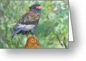 Perched Birds Greeting Cards - Bataleur Eagle Greeting Card by Caroline Street