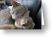 Cat Picture Greeting Cards - Bath Time Greeting Card by James Steele