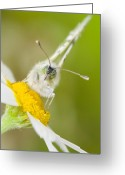 Antenna Greeting Cards - Bath White Greeting Card by Andre Goncalves