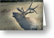 Wounded Warrior Greeting Cards - Battle Tested Elk Warrior Greeting Card by Nava Jo Thompson