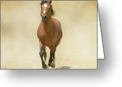 Running Horse Greeting Cards - Bay Horse Galloping In Dust Greeting Card by Christiana Stawski