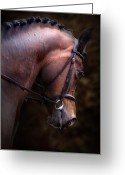 Pony Greeting Cards - Bay Horse Head Greeting Card by Ethiriel  Photography