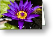 Canon 7d Greeting Cards - Bayou Beauty Greeting Card by Scott Pellegrin
