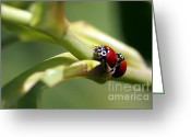 Beetles Greeting Cards - Be Mine Greeting Card by Sharon  Talson