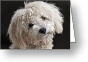 Dog Prints Photo Greeting Cards - Be My Valentine Greeting Card by Lisa  DiFruscio