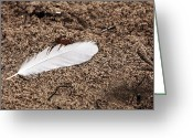 White Feather Greeting Cards - Beach Feather Greeting Card by John Rizzuto