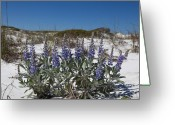 Grayton Beach Greeting Cards - Beach Flora Greeting Card by Charles Warren