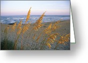 North America Greeting Cards - Beach Scene With Sea Oats Greeting Card by Steve Winter