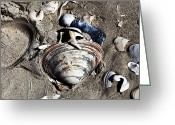 Treasures Greeting Cards - Beach Shells Greeting Card by John Rizzuto