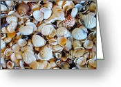 Shell Texture Greeting Cards - Beach Treasures Greeting Card by Andres Mugno