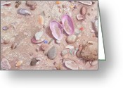 Treasures Drawings Greeting Cards - Beach Treasures Greeting Card by John Ursillo