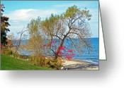 Tans Greeting Cards - Beach Tree Greeting Card by Aimee L Maher