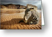 Zebra Greeting Cards - Beach Zebra Greeting Card by Carlos Caetano
