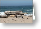 Beach Prints Greeting Cards - Beachy Greeting Card by Amanda Barcon
