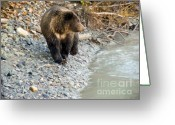 American Brown Bear Greeting Cards - Bear At The River Greeting Card by Dora Miller