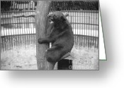 Black Bear Climbing Tree Greeting Cards - Bear at the Zoo Greeting Card by Jan Faul
