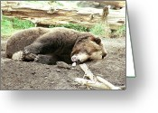 Ken Sjodin Greeting Cards - Bear5 Greeting Card by Ken  Sjodin