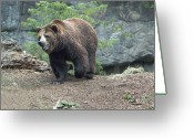 Ken Sjodin Greeting Cards - Bear9 Greeting Card by Ken  Sjodin