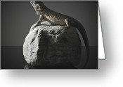 Side View Greeting Cards - Bearded Dragon On Rock Greeting Card by Darren Woolridge Photography - www.DarrenWoolridge.com