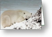 Hibernation Greeting Cards - Bearly Sleeping Greeting Card by Judy  Jones