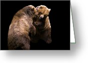 James Barnes Greeting Cards - Bears Fighting Greeting Card by James Barnes